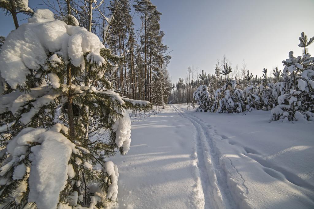 Блестящие - белым снегом